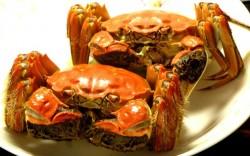清蒸螃蟹怎么做好吃 清蒸螃蟹
